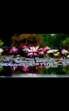HD Photo Spring Blossom LWP apk screenshot