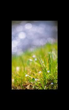 My HD Photos Spring Flower LWP screenshot 3