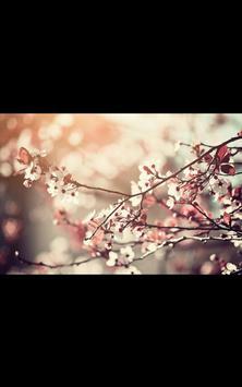 My HD Photos Spring Flower LWP poster
