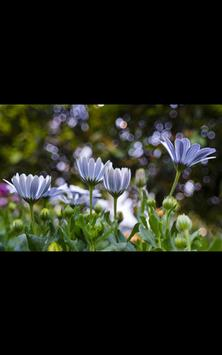 My HD Photos Spring Flower LWP screenshot 2