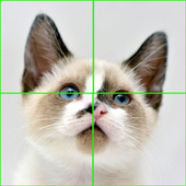 Little Cats Puzzles icon