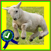 Adventurer Sheep Farm Running icon