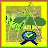 Hungry Locust Adventure icon
