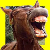 Funny Horses Faces Matching icon
