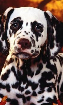 Dalmatian Dogs Best Jigsaw Puzzles apk screenshot