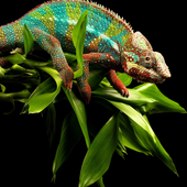 Reptiles and Lizard Best New Jigsaw Puzzles icon