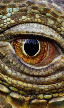 Reptiles and Lizard Best New Jigsaw Puzzles poster