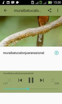 Kicau Master Murai Batu MP3 apk screenshot