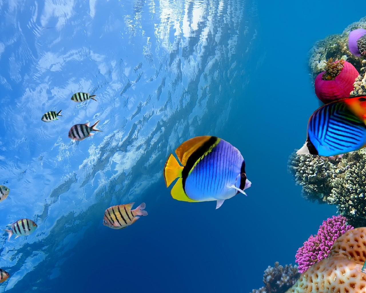 Fish Wallpaper 3D Aquarium New Background HD 2019 for