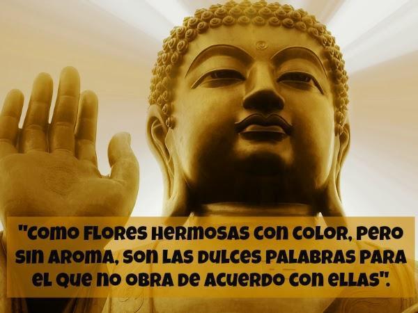 Imágenes De Buda Con Frases For Android Apk Download