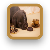 Tea Cup Dog icon