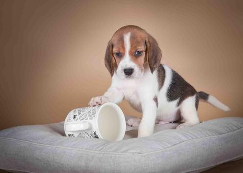 Tea Cup Dog screenshot 3