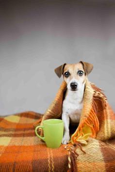 Tea Cup Dog poster