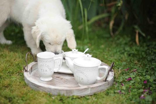 Tea Cup Dog screenshot 13