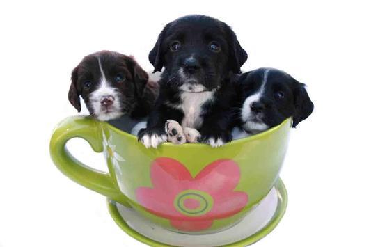 Tea Cup Dog screenshot 14