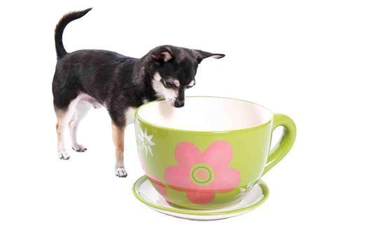Tea Cup Dog screenshot 15