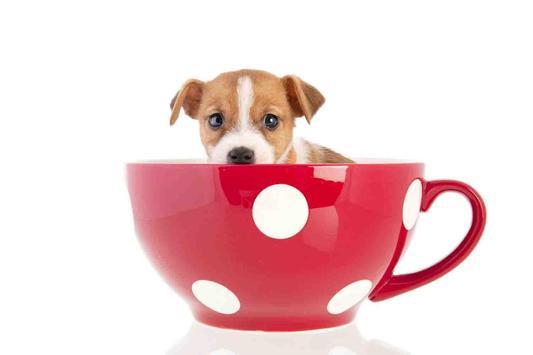 Tea Cup Dog screenshot 1