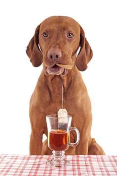 Tea Cup Dog screenshot 2