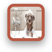 The Dog Wallpapers Dog icon