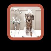 The Dog Wallpapers Dog simgesi
