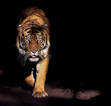 tiger background apk download free entertainment app for android
