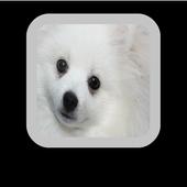 White Dog Wallpaper icon