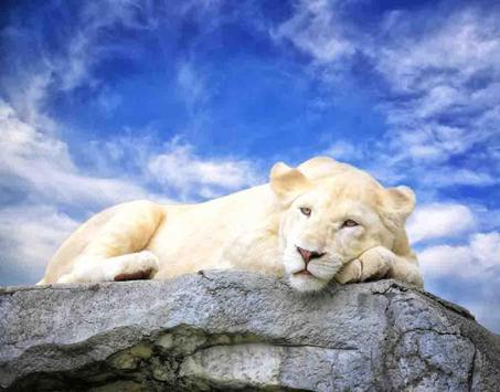 Baby Lion Wallpapers Free apk screenshot