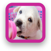 Beautiful Dog Wallpapers icon