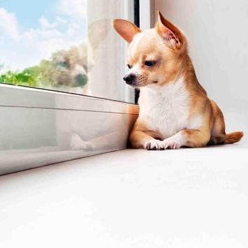Beautiful Dog Wallpapers apk screenshot