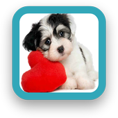 Best Dog Wallpapers icon