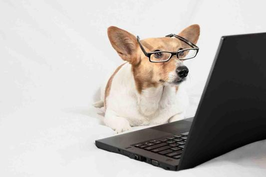 Best Dog Wallpapers screenshot 11