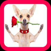 Chihuahua Wallpaper icon