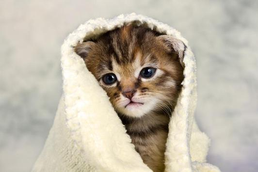 Cute kittens wallpaper for android apk download cute kittens wallpaper thecheapjerseys Choice Image