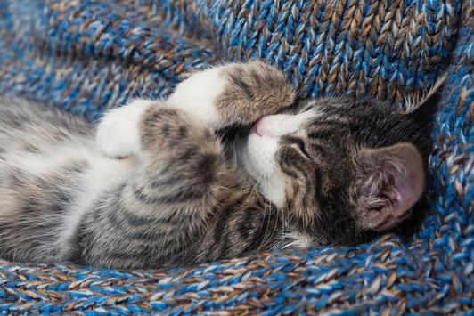 Cute kittens wallpaper for android apk download cute kittens wallpaper screenshot 17 thecheapjerseys Gallery