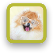 Cute Puppy Backgrounds icon