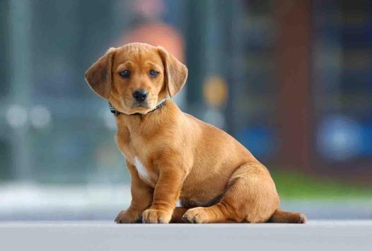 Cute Puppy Backgrounds screenshot 16