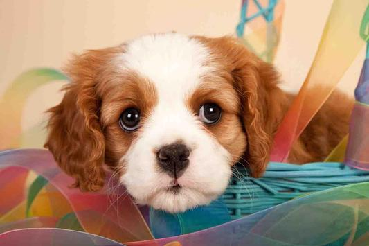 Cute Puppy Backgrounds screenshot 1