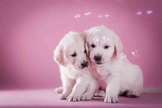 Cute Puppy Backgrounds screenshot 21