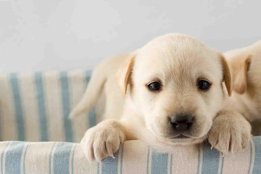 Cute Puppy Backgrounds screenshot 2
