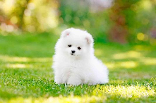 Cute Puppy Backgrounds screenshot 3