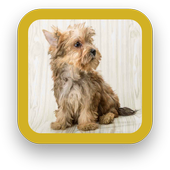 Cute Puppy Dog Wallpapers icon