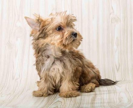 Cute Puppy Dog Wallpapers screenshot 15