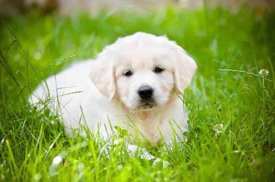 Cute Puppy Dog Wallpapers screenshot 13