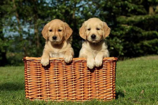 Cute Puppy Dog Wallpapers screenshot 2