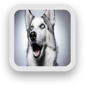 Dog Wallpapers Free icon