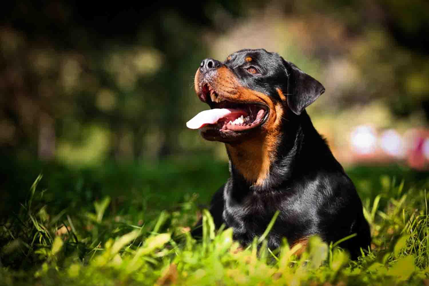 Dog Wallpapers Free Download For Android Apk Download