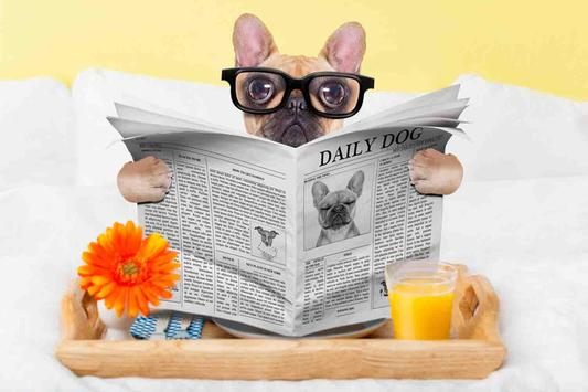 Dog Wallpapers HD apk screenshot
