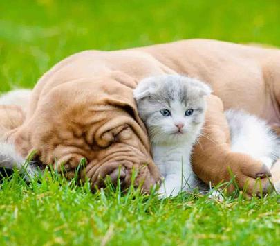Dog and Cat Wallpaper screenshot 7