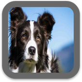 Dog Images HD icon