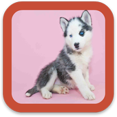 Dogs Pictures Wallpaper icon